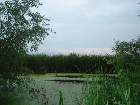 В Ренийском районе в реке обнаружен труп мужчины