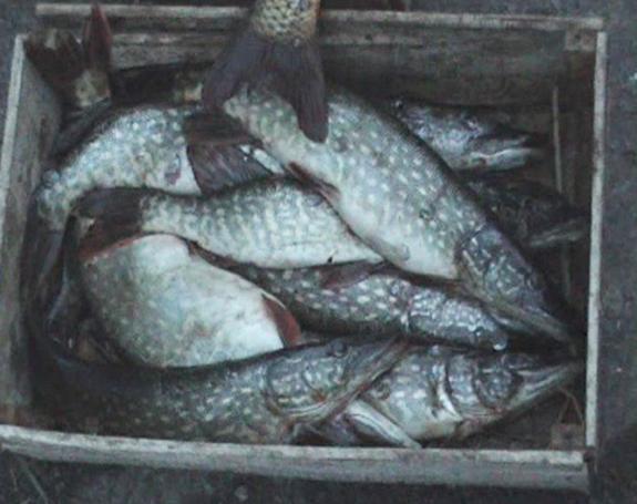 Пограничники задержали измаильского браконьера с уловом