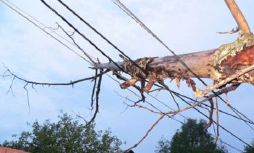 В Тарутино дерево рухнуло на линию электросети