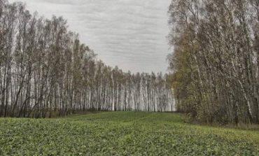 В Болградском районе заморозки убили часть посевов - чиновник