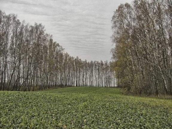 В Болградском районе заморозки убили часть посевов — чиновник