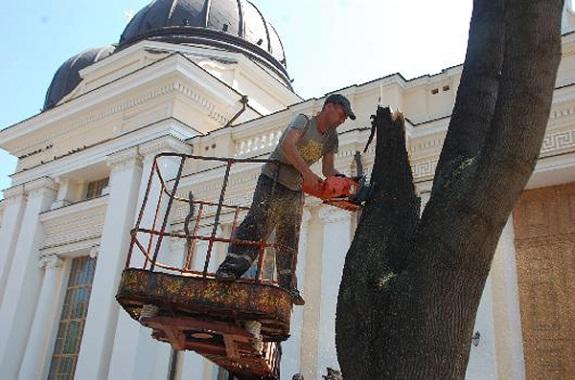 В Одессе хотят снести более 700 деревьев — чиновник