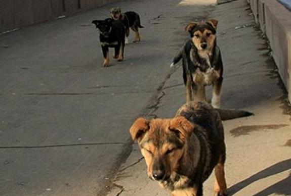 В Болграде на бездомных животных потратят почти 800 тысяч гривен