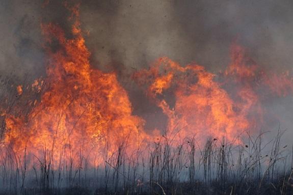 В Измаильском районе неизвестные устроили крупный пожар на заповедной территории