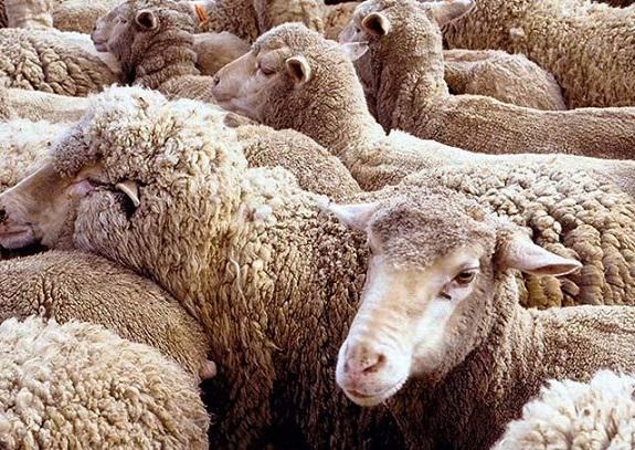 Жителю Арцизского района суд назначил 4 года тюрьмы за кражу овец