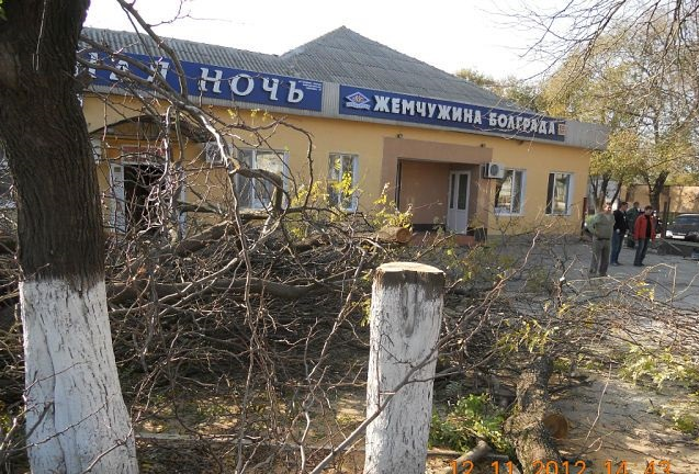 Болградский районный суд решил не наказывать виновных в самовольной вырубке деревьев (ФОТО)