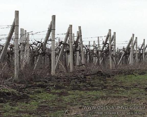 Аграрии из Арцизского района обманули государство больше чем на миллион гривен