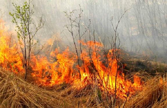 Жители Саратского района лишились запасов сена