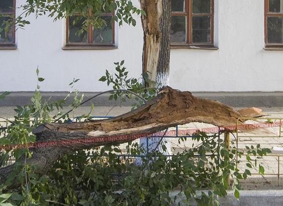 В Измаиле дерево упало на пожилого мужчину