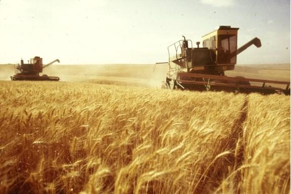 Украина сократила экспорт сельхозпродукции на 13%
