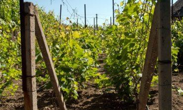Шабо – земля вина, швейцарского наследия и современной фотопаранойи