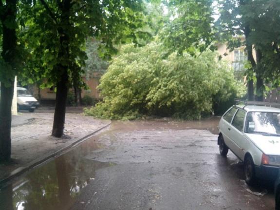 Буря в Измаиле повалила деревья и повредила машины