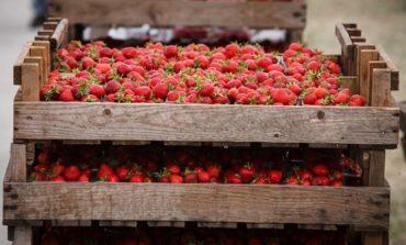 Экспорт клубники и яблок из Украины во Францию значительно вырос