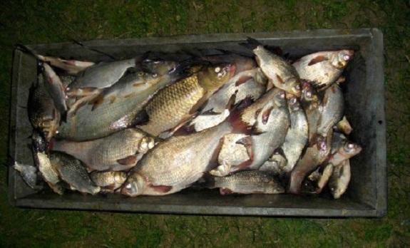 Бессарабские браконьеры выловили 120 кг рыбы