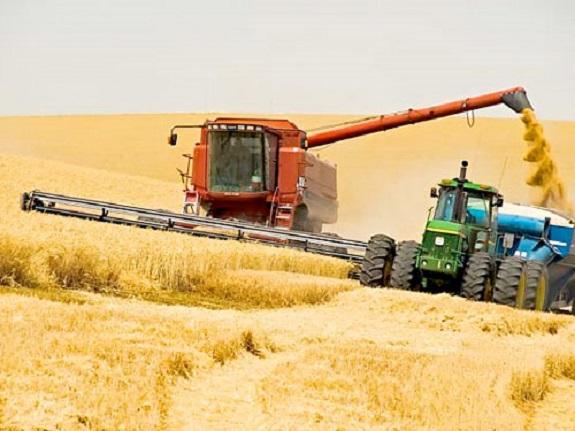 Килийский район показывает высокую урожайность ранних зерновых