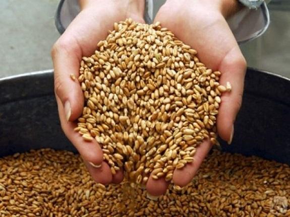Саратский район собрал рекордное количество зерна — председатель РГА