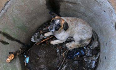 В Измаиле спасли жизнь собаке