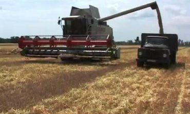 Белгород-Днестровские аграрии убрали первые сто тысяч тонн зерновых