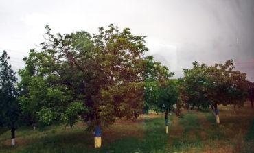 В Тарабунарском районе деревья выкрасили в украинские национальные цвета (ФОТО)