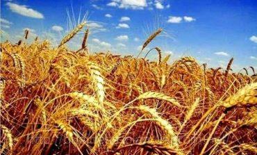 Запасы зерновых в Украине составили 24 миллиона тонн