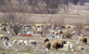 Власть и народ: Кто превращает Сарату в одну большую мусорную свалку?