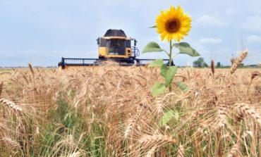 Объем сельхозпродукции в Украине за 11 месяцев сократился на 12,4%
