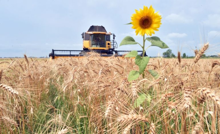 Агроэкспорт в ЕС вырос почти на треть