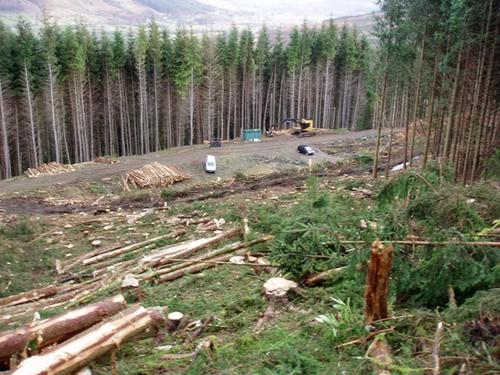 Пахотный участок среди леса на месте вырубки