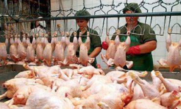 В Украине увеличилось производство мяса птицы