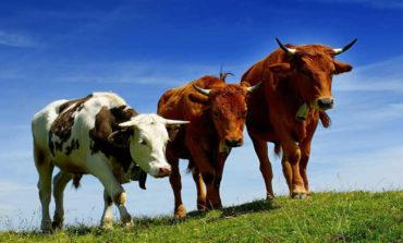 Одесская область продолжает сокращать поголовье сельскохозяйственного скота