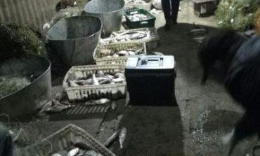 Днестровские браконьеры пытались ограбить страну на 90 тыс гривен