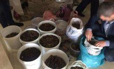 В Ровенской области изъяли янтаря на два миллиона гривен