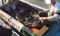 В Одесской области поймали браконьеров с уловом на 7 тыс гривен