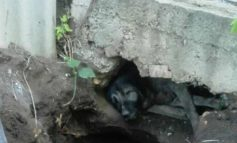 Одесские спасатели пришли на выручку попавшим в беду собаке и корове