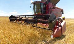 В Болградском районе убрано 88% площадей ранних зерновых