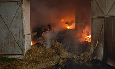 В Одесской области произошел крупный пожар на свиноферме