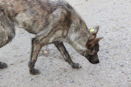 Как в Белгороде-Днестровском решается проблема бродячих собак