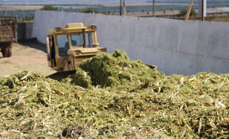 В «Днестровской» идёт заготовка кормов