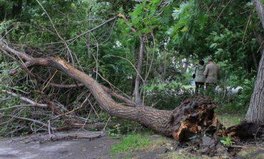 В Одессе непогода повалила деревья