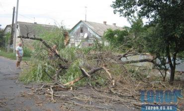 В Арцизе ветер повалил деревья