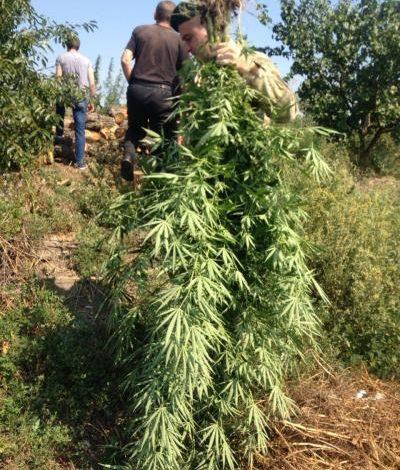 В Одесской области разоблачили торговца оружием и наркотиками