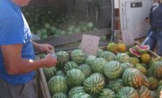 Как в Арцизе ярмарка сельхозпродукции проходила (фоторепортаж)