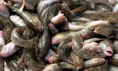 Вылов рыбы в Украине за 9 месяцев сократился почти на 15 %