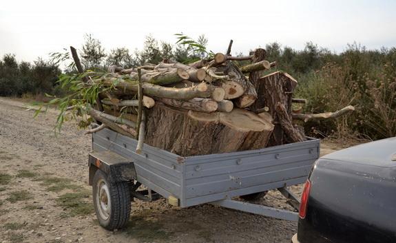 В Ренийском районе уничтожают лес… по талонам Новосельского сельсовета