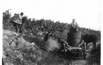 Солнечная лоза Бессарабии: немного о виноделии
