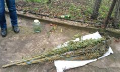 В селе Табаки Болградского района участились случаи обнаружения наркотиков