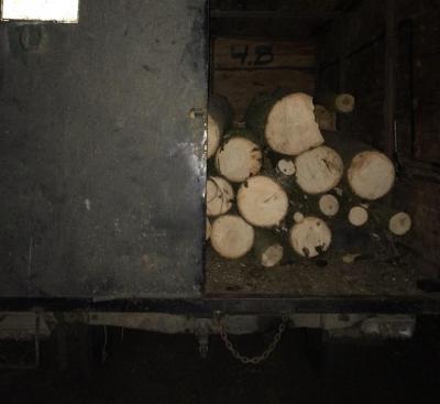 В Одесской области поймали двоих горе-лесорубов