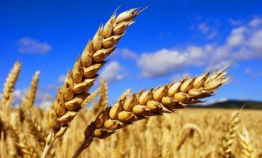 Украина существенно увеличила экспорт зерна