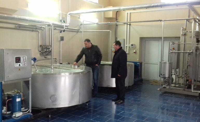 Болгары по соседству: в Тараклии готовятся к старту производства настоящей болгарской брынзы