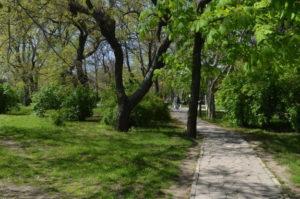 Городской сад Измаила омолодят деревьями с фитонцидными свойствами